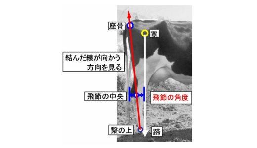 ホルスタインの長命連産に影響を与える『後肢側望』
