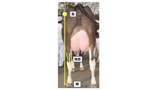 ホルスタインの耐久性に関係する『後肢後望』