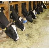 乳牛 の 配合飼料 と 添加剤 について一考