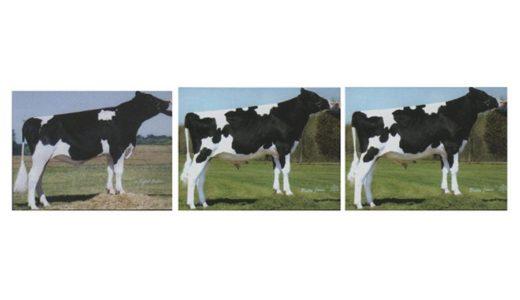 ホルスタイン種雄牛 の タイプ について