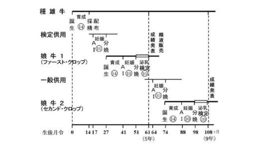 ホルスタイン種雄牛の後代検定について