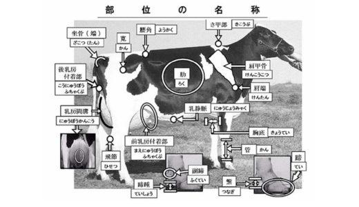 ホルスタインの牛体の部位の名称