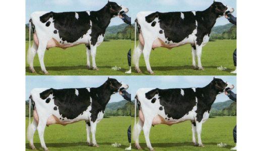 牛のクローン ④ ホルスタインのクローン・メス編