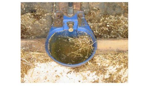 酪農牧場 の 給水器 の 管理